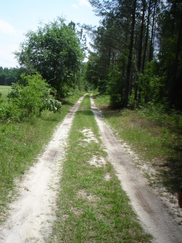 Swamp Hollow Ranch, 2008, spring 028